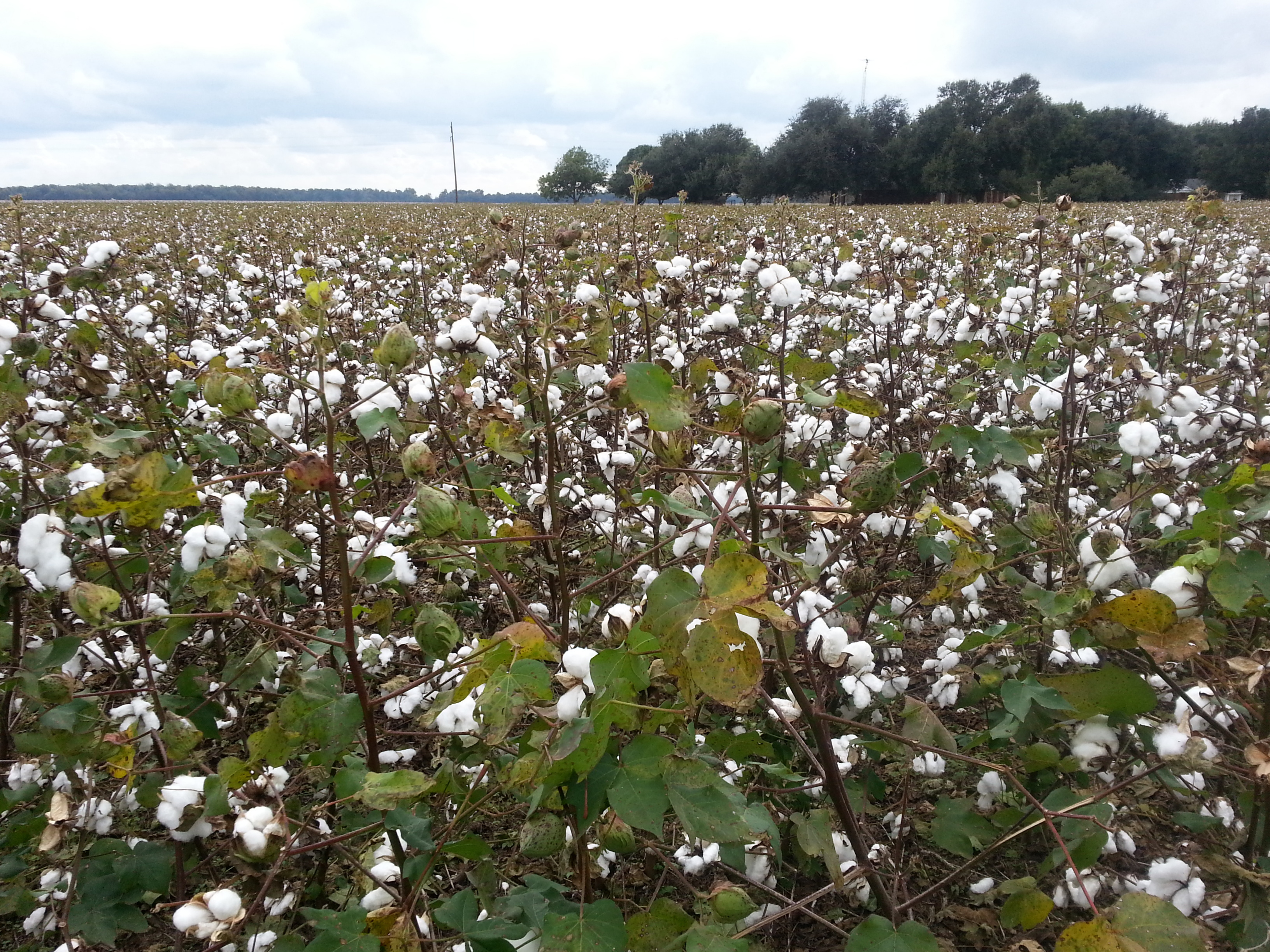 Frogmore Cotton... Sharecropping House