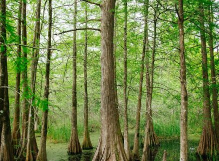 Plantation Country, Louisiana Bed and Breakfast Association